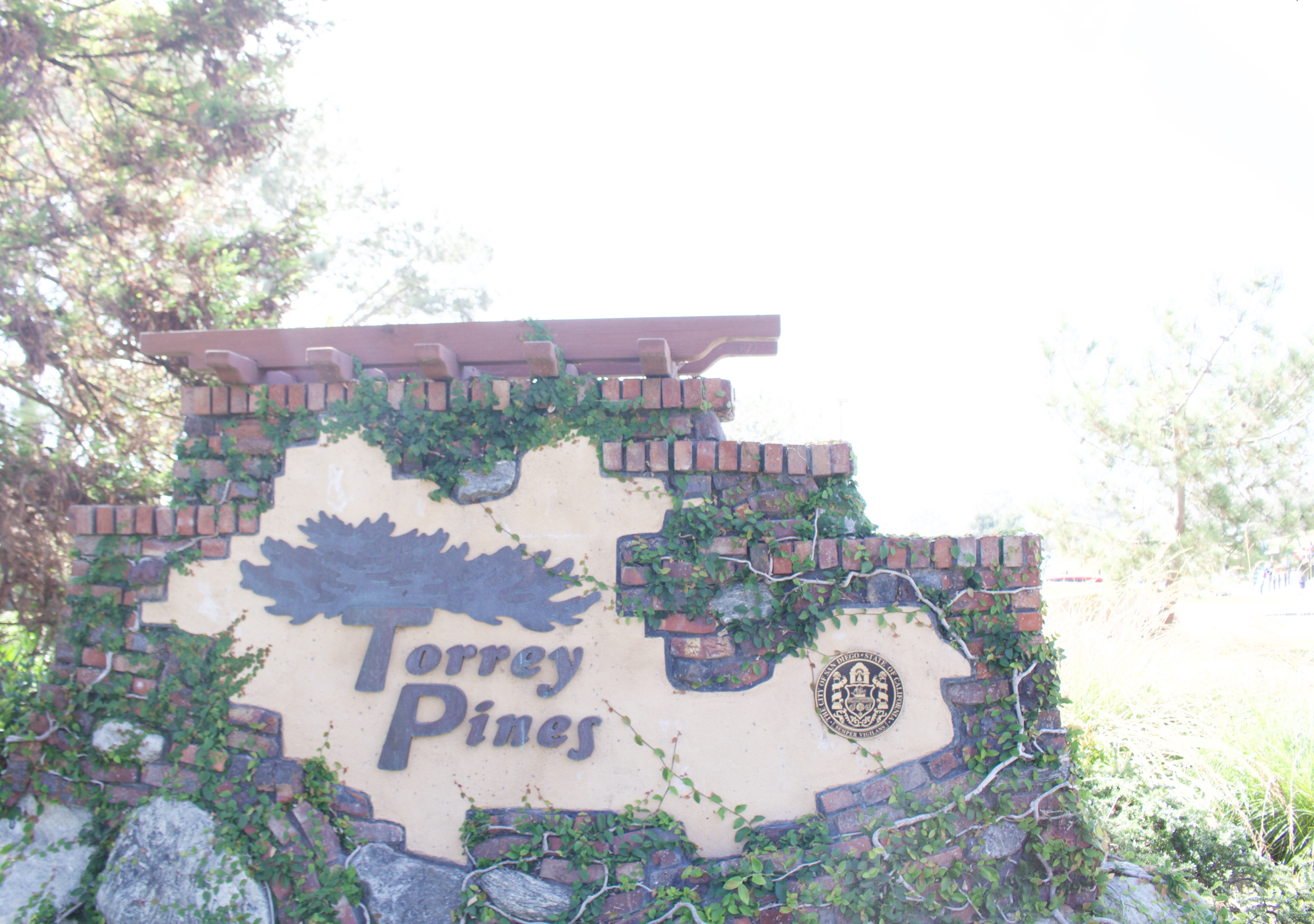 Torrey Pines - My Styled Life