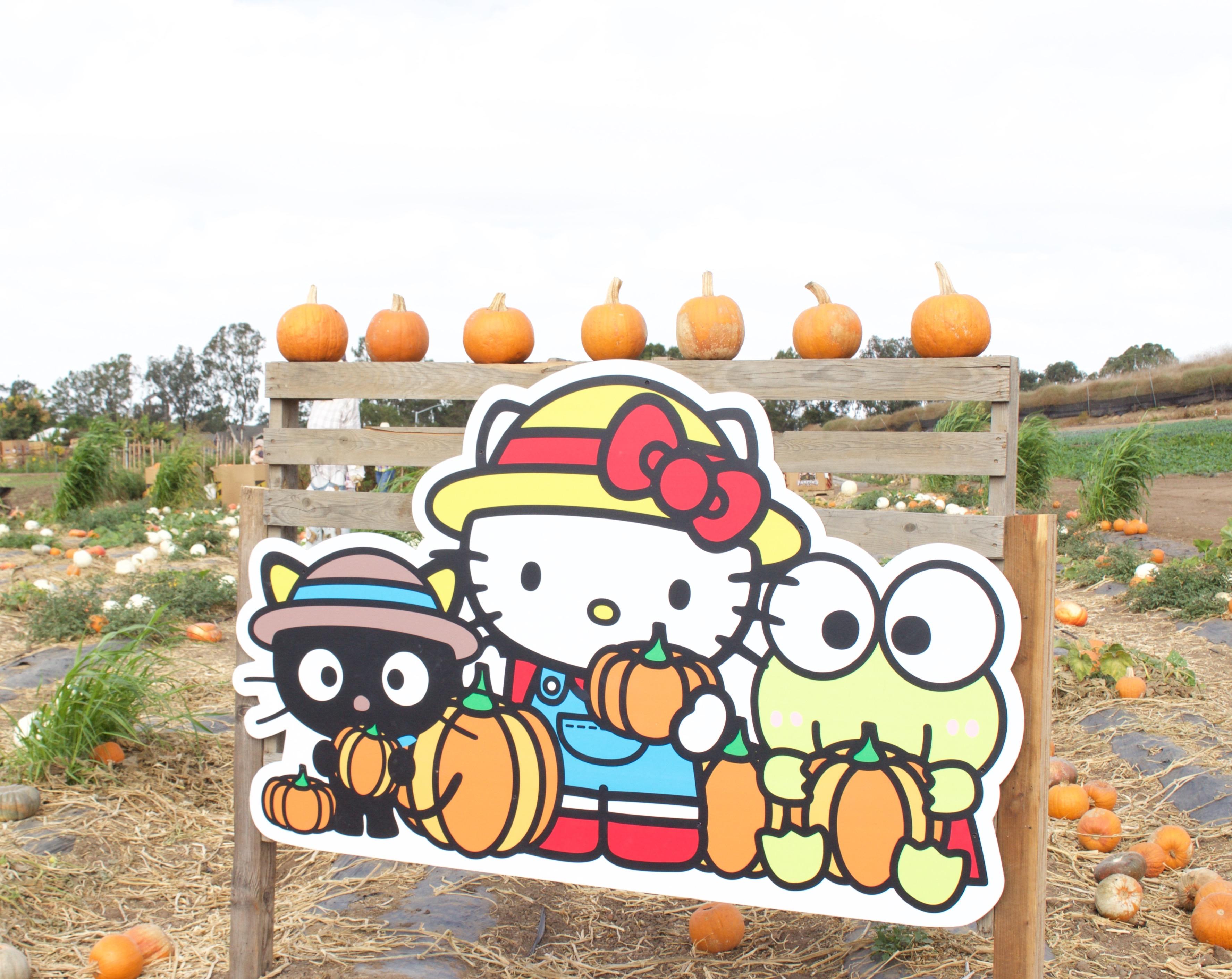 sanrio pumpkin patch