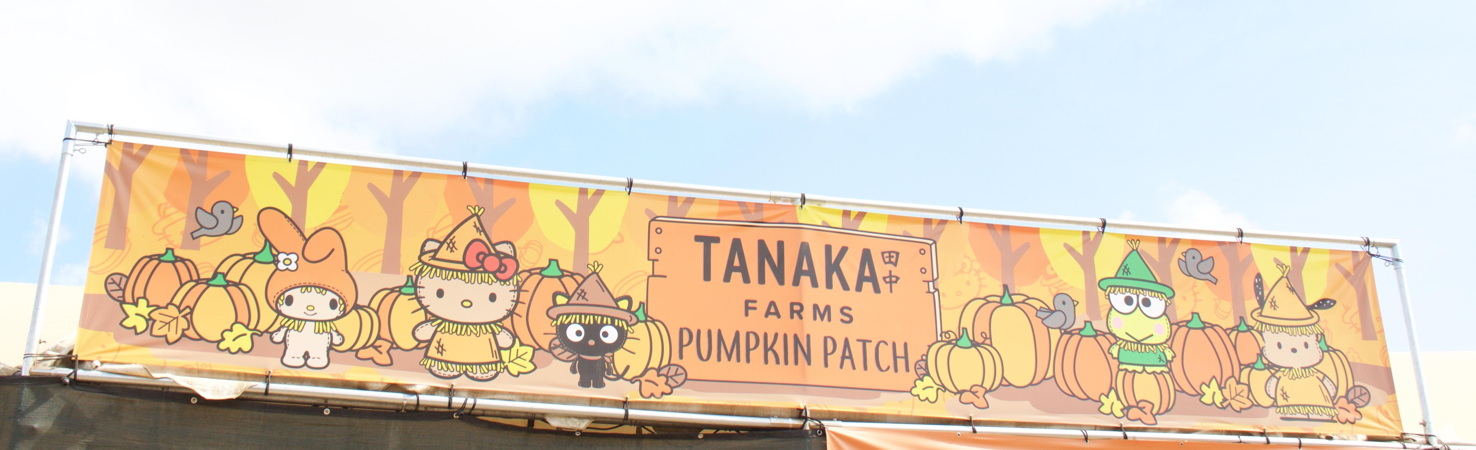 tanaka farms 2017 pumpkin patch