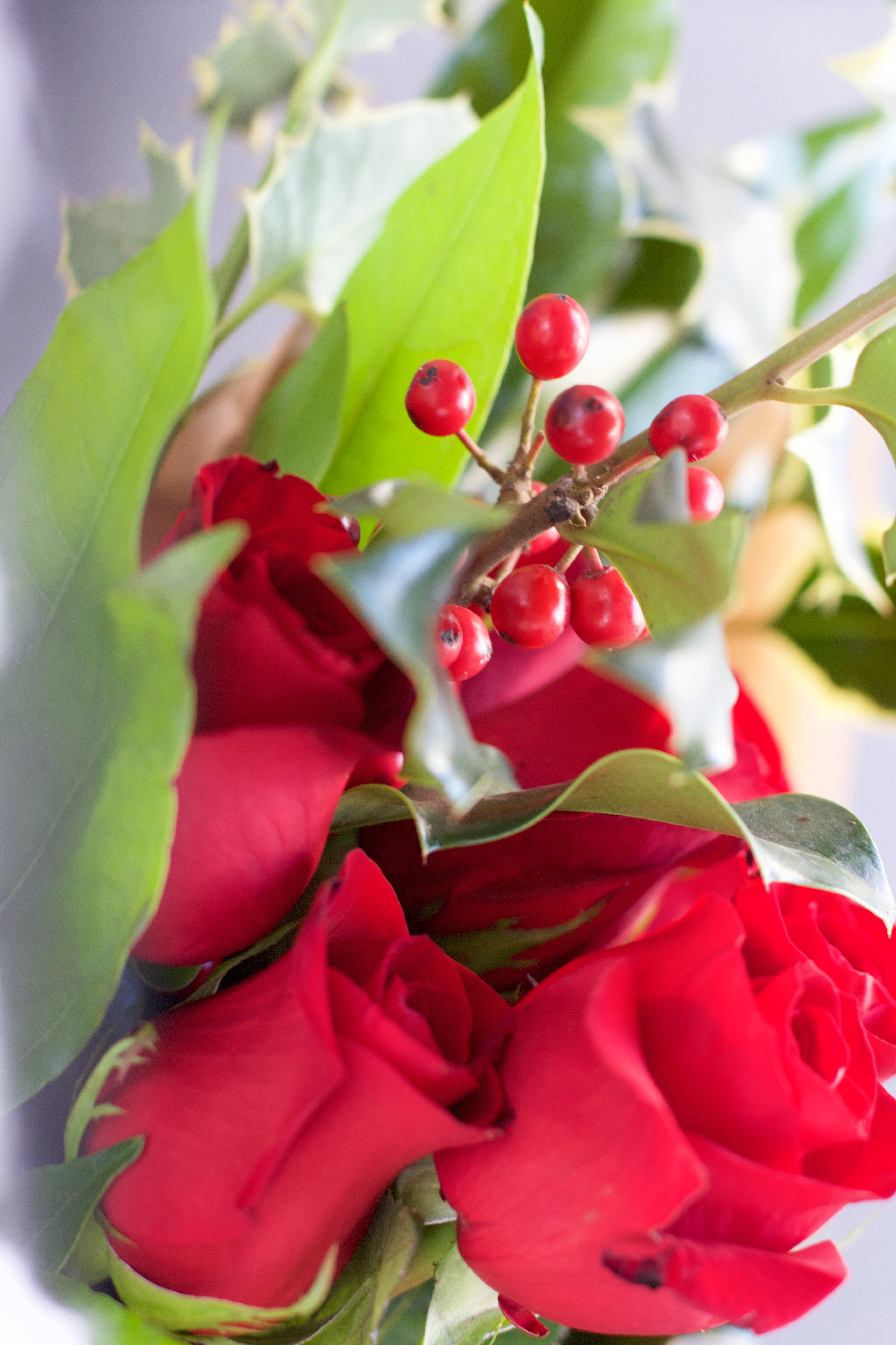 Christmas flowers and holly