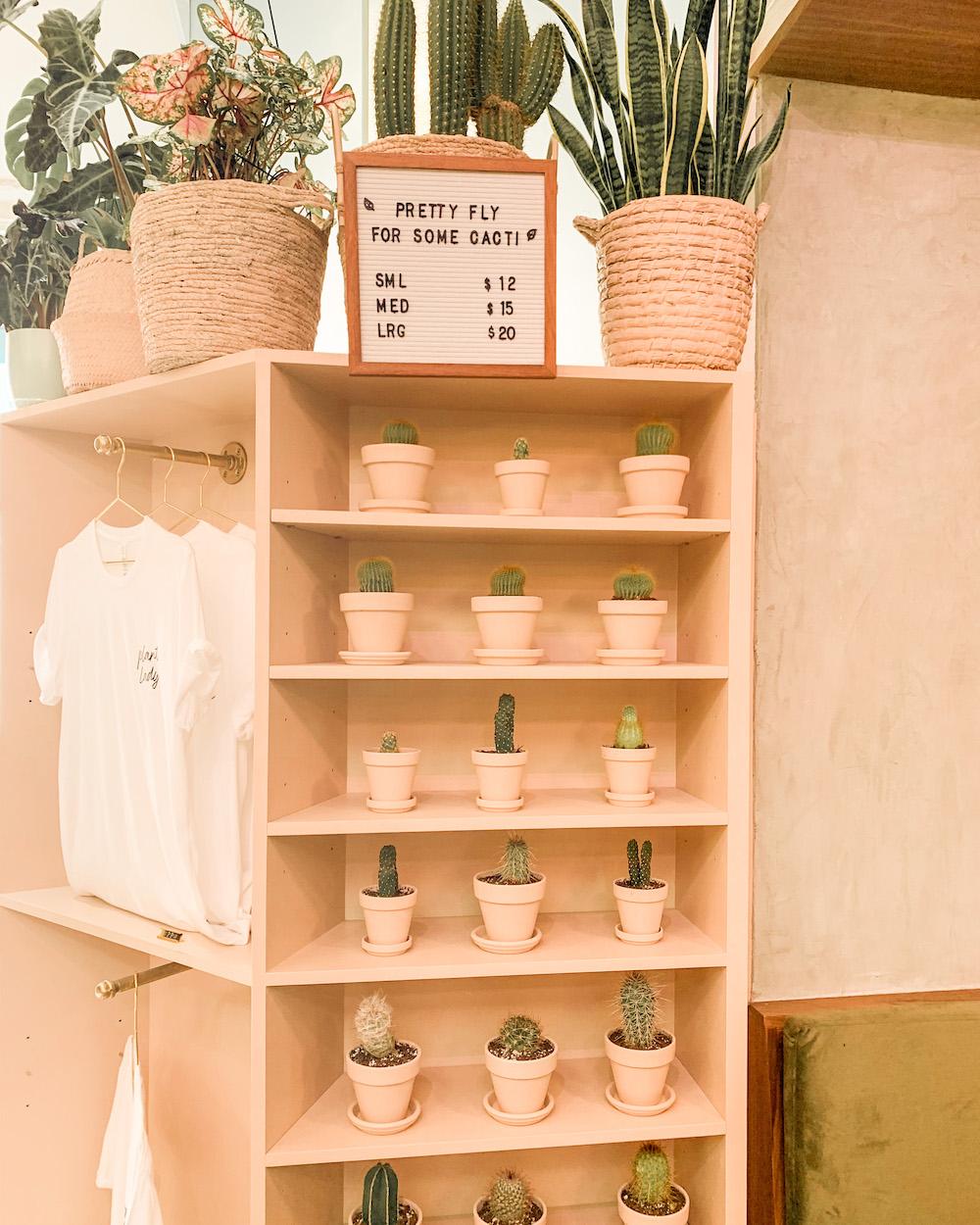 coffee & plants la