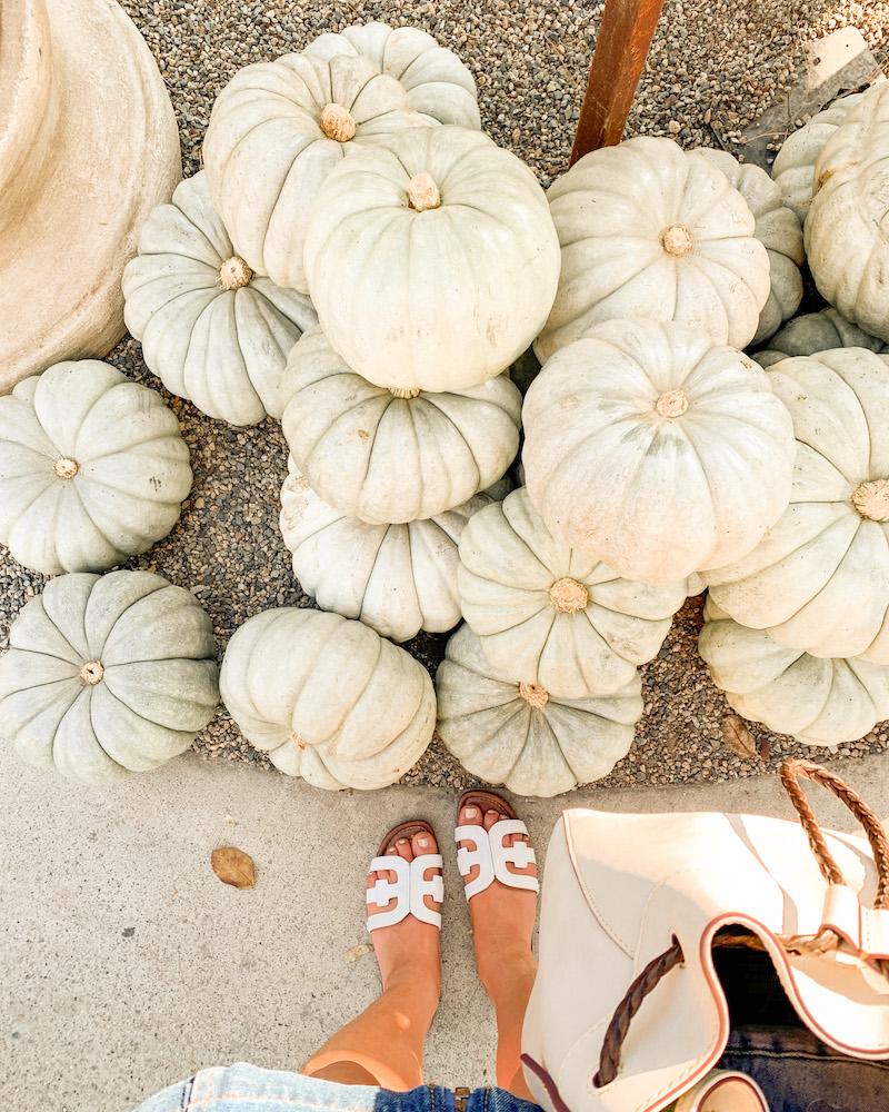 oc pumpkin patch