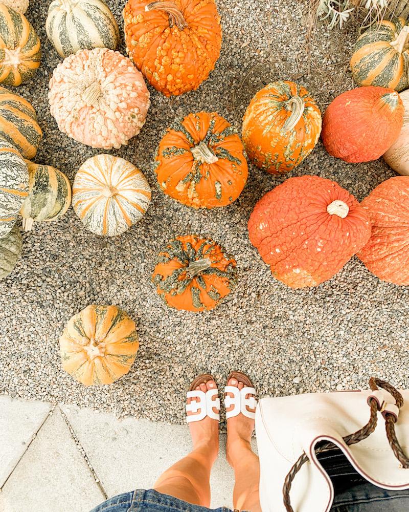 orange county pumpkin patch oc