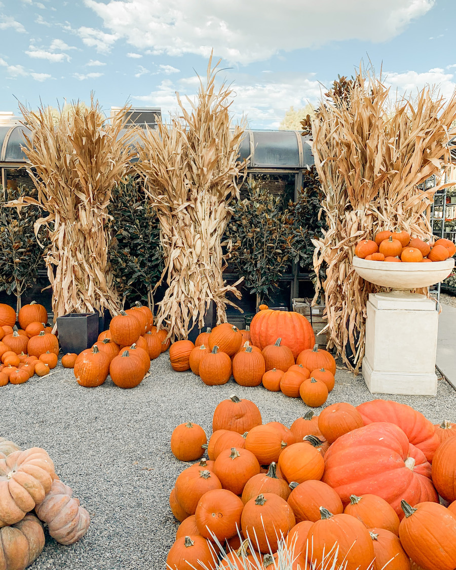 pumpkin patch in orange county